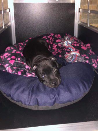 Další naše překrásné miminko je již v novém domově Cherokee Pearl Bohemia❤️❤️❤️❤️❤️❤️❤️Oliverek❤️❤️❤️❤️❤️❤️❤️